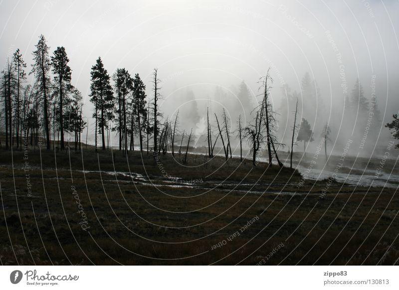Nebelwald Baum Wald kalt Herbst Nebel USA