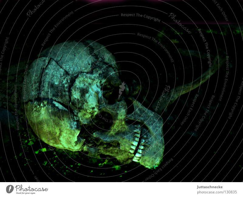 Ärztefehler Skelett Tod ausgebleicht Pirat Kelten Grab Friedhof Zombie Voodoo kultig Beerdigung ungesund Archäologie Archäologe Zahnarzt verfaulen untot
