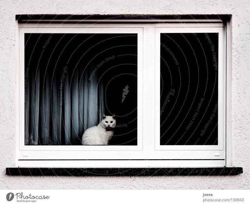 Zimmer mit Aussicht weiß ruhig Einsamkeit Tier dunkel Fenster Katze Angst Raum beobachten Vorhang Langeweile Geländer gemütlich Haustier