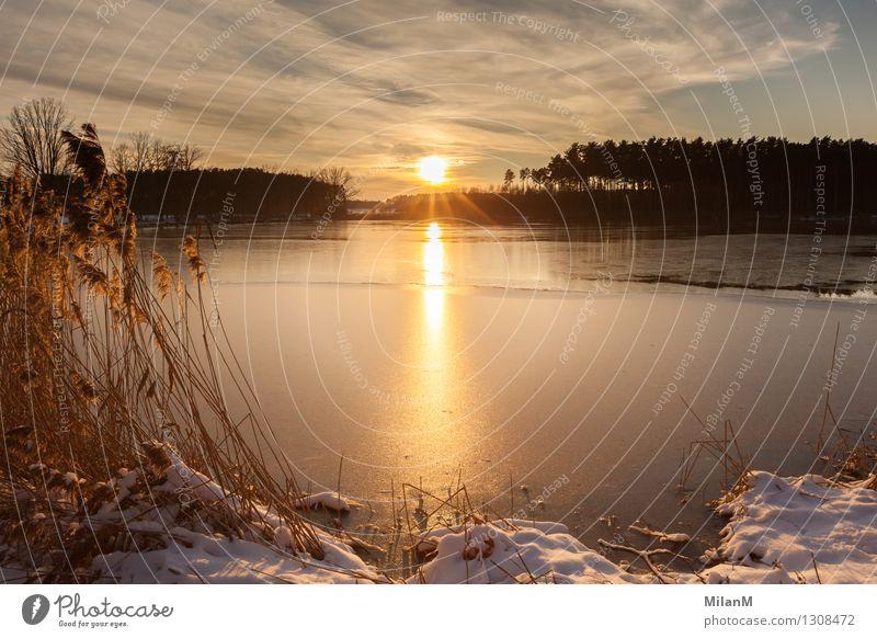 Wintersonne am See Wohlgefühl Zufriedenheit Erholung ruhig Ferne Freiheit Sonne Schnee Winterurlaub Natur Landschaft Wasser Himmel Wolken Horizont Sonnenaufgang