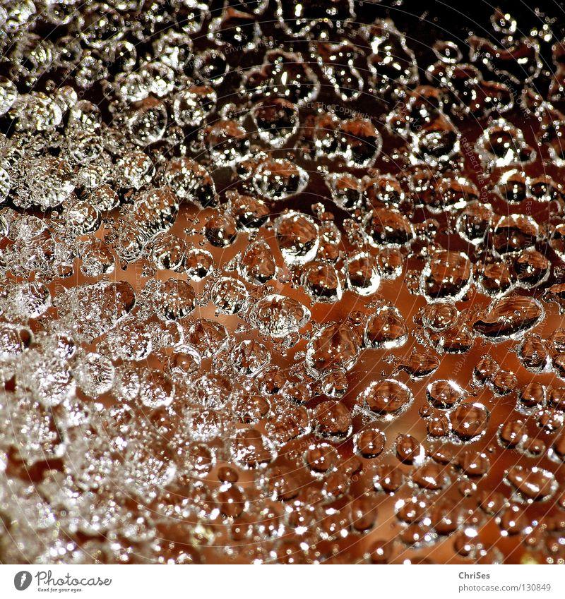 Tautropfen_02 Raureif tauen gefroren Spinnennetz Winter braun schwarz Eis Nordwalde Makroaufnahme Nahaufnahme Wasser Seil Wassertropfen Netz Bodenbelag