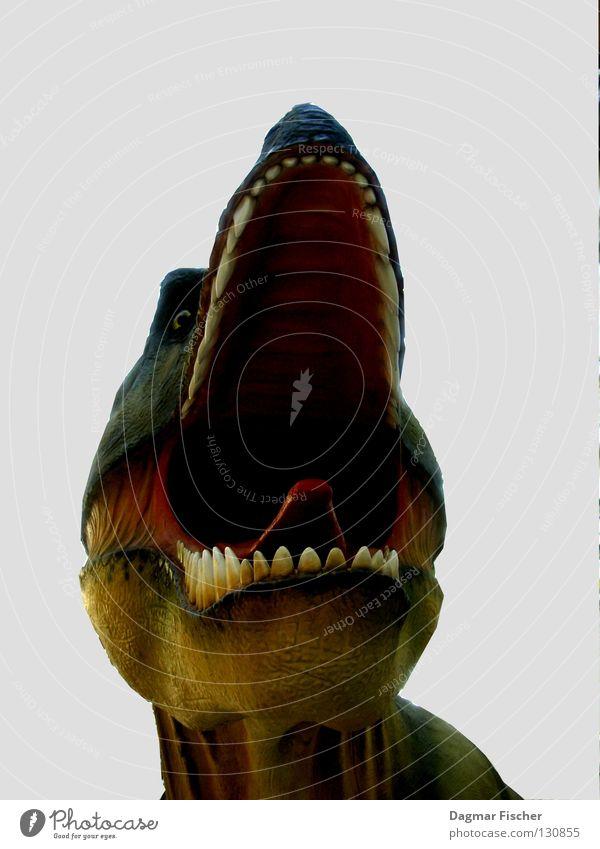 Fiffi, mein Haustier Farbfoto Freisteller Natur Tier 1 bedrohlich Angst gefährlich Aggression Ärger Dinosaurier Monster Echsen Tierfigur drohen ausgestorben