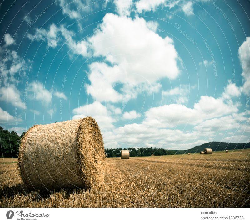 Nadel im Heuhaufen Wellness Umwelt Natur Erde Himmel Sonne Klima Klimawandel Wetter Schönes Wetter Pflanze Wiese Feld Idylle Strohballen Strohrolle Herbst
