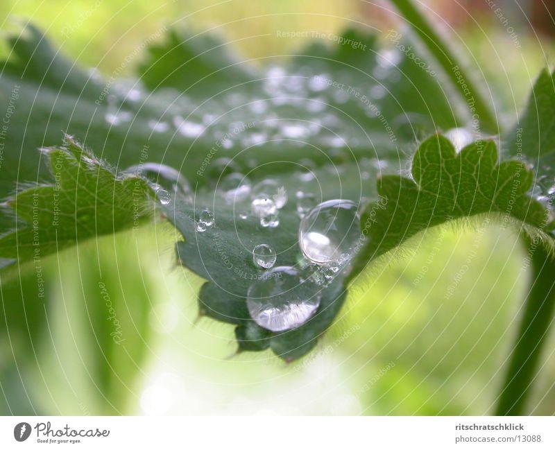 morgentau Wasser Blatt Wassertropfen Seil