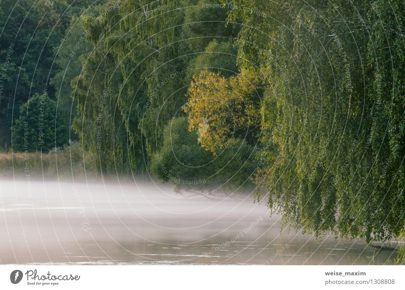 Nebeliger Morgen auf dem Fluss Natur Landschaft Pflanze Erde Wasser Sommer Wetter Baum Gras Sträucher Flussufer Schifffahrt frei frisch schön einzigartig gelb