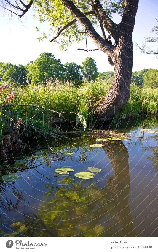 Spreewald   nah am Wasser gebaut Natur blau Pflanze grün Sommer Baum Landschaft Umwelt Gras Sträucher Schönes Wetter Fluss Flussufer Bach ländlich Grünpflanze