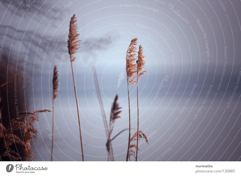 Prinzip einfach schön Natur Wasser Sonne Meer Gefühle Küste See Luft Wind gold Nebel frisch Spiegel Jahreszeiten Schilfrohr