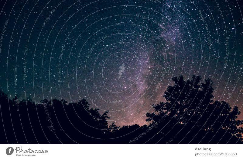 nachts im wald 2. Himmel Natur blau Sommer schön Einsamkeit ruhig Ferne Wald dunkel schwarz Gefühle außergewöhnlich Stimmung Horizont träumen