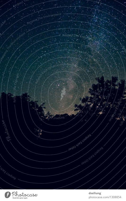 nachts im wald. Himmel Natur blau Sommer schön Einsamkeit ruhig Ferne Wald dunkel schwarz Gefühle außergewöhnlich Stimmung Horizont träumen