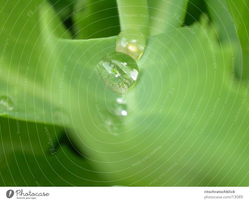 morgentau die zweite Blatt Seil Wasser Wassertropfen