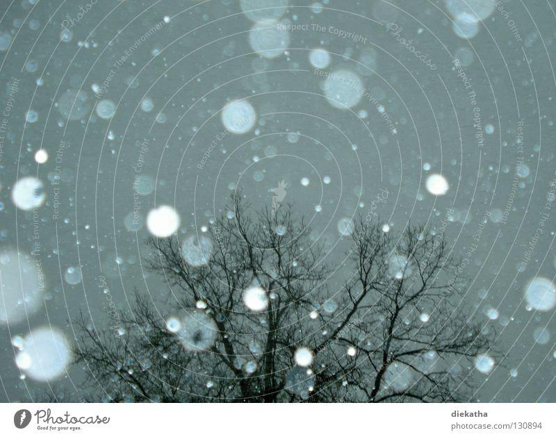 Flocke nervt Baum Winter kalt Schneeflocke grau Schneefall Jahreszeiten ruhig April Eis Wetter Tristess Reflexion & Spiegelung durchsichtig Ast