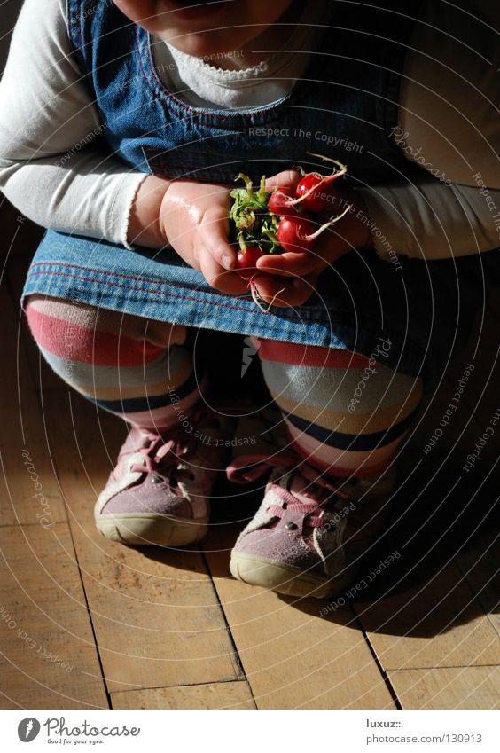Junges Gemüse Kind Mädchen Freude lachen Gesundheit frisch Ernte Verschmitzt hockend Landwirtschaft Radieschen