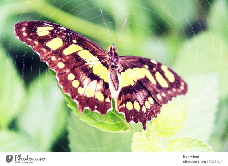 in voller pracht Natur Pflanze schön Sommer Baum Erholung Blatt Tier Frühling Wiese außergewöhnlich Garten fliegen Park elegant Wildtier