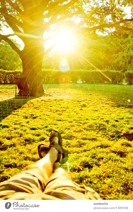 Hochsommer Sommer hochsommer Park jungfernheide Baum Sonne Gegenlicht hell blenden liegen Liege Beine Fuß Schuhe Erholung bequem Sommerabend Wiese Liegewiese