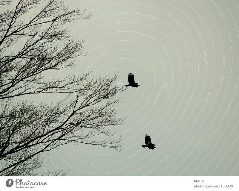 Duett Umwelt Natur Tier Luft Himmel Baum Vogel 2 Tierpaar fliegen frei Zusammensein natürlich trist grau Freiheit gleich trüb paarweise Farbfoto Menschenleer