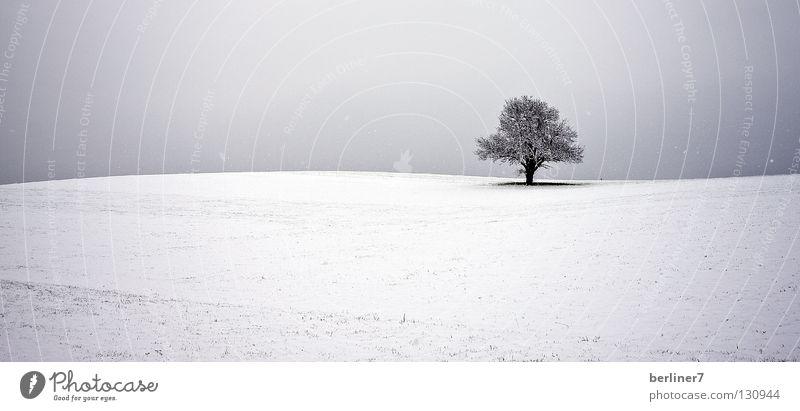 Welliger Horizont wellig Baum einzeln Winter Schnee Himmel einzelnstehender baum Kontrast