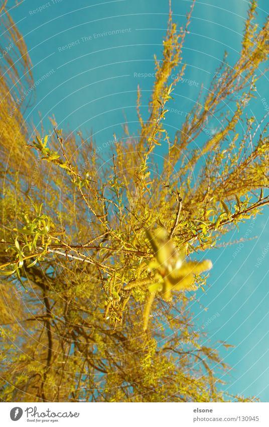 ::EXPLOSION:: Baum blau rot gelb Farbe Blüte Frühling orange fliegen Weide Blütenknospen Schwung Trauerweide