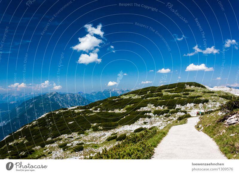 oben angekommen Ferien & Urlaub & Reisen Ausflug Abenteuer Sommer Sommerurlaub Sonne Berge u. Gebirge wandern Klettern Bergsteigen Umwelt Natur Landschaft Luft