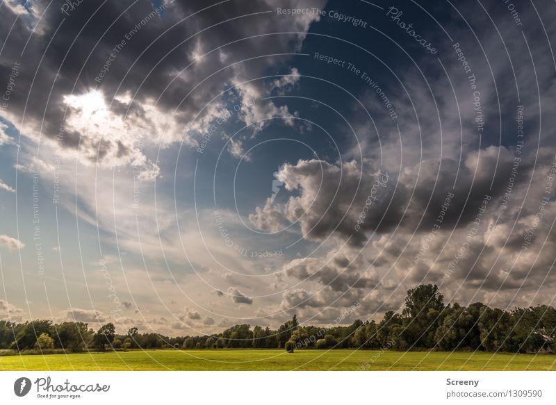 Ebene Natur Landschaft Pflanze Himmel Wolken Sommer Wetter Baum Gras Sträucher Wiese hoch blau grün weiß ruhig Farbfoto Außenaufnahme Menschenleer Tag Licht