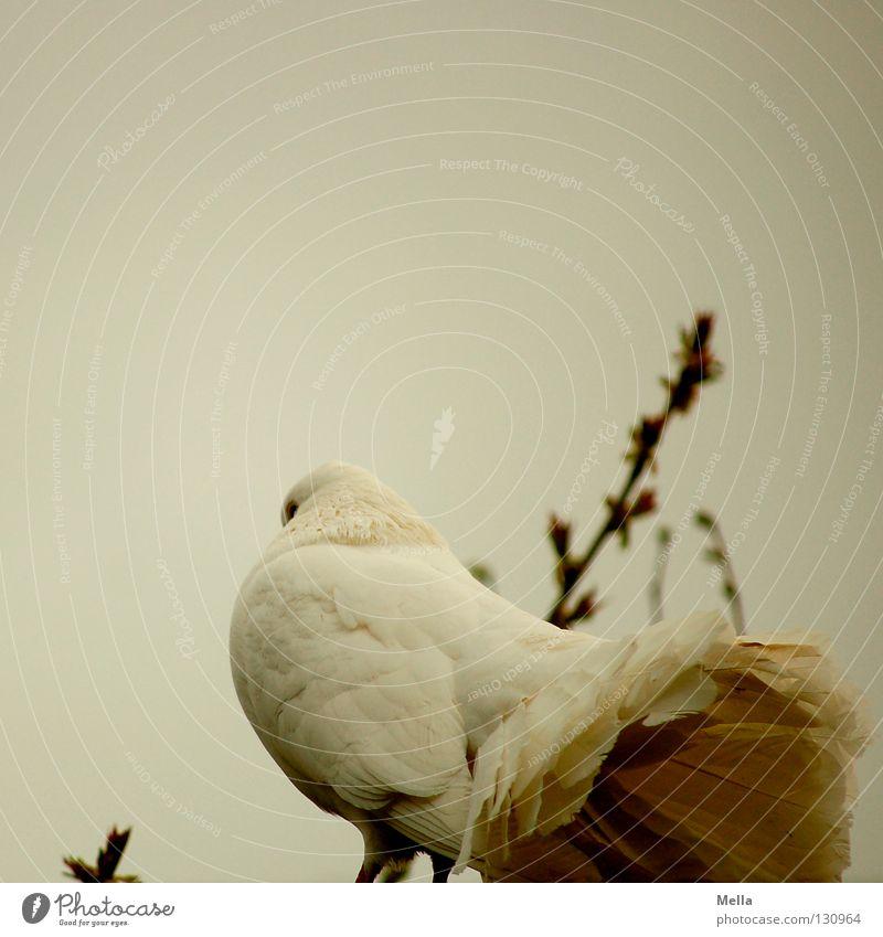 Untern Rock geschaut Umwelt Natur Tier Vogel Taube 1 hocken sitzen natürlich trist grau weiß Frieden Friedenstaube Farbfoto Außenaufnahme Menschenleer