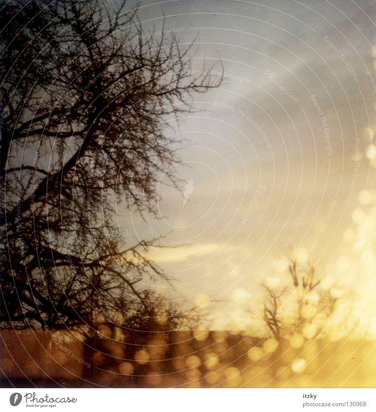 after Rain III Wasser Baum Sonne Glas Wassertropfen