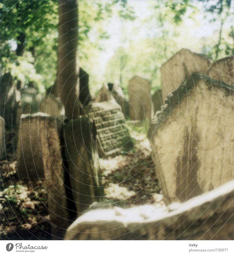 Jüdischer Friedhof Prag Sonne Trauer Verzweiflung Friedhof Grab Grabstein Judentum Tschechien Prag Grabmal