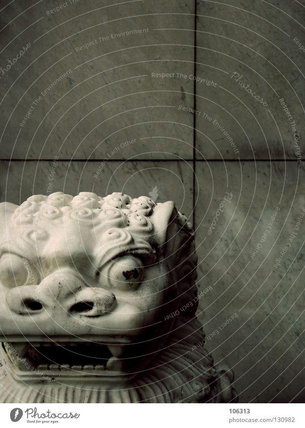 DRAGON IN FRONT OF A CHINESE RESTAURANT Wand Stein Erde Mund Kraft Hintergrundbild Nase offen gefährlich bedrohlich Kultur Gebiss Schutz Asien Gastronomie