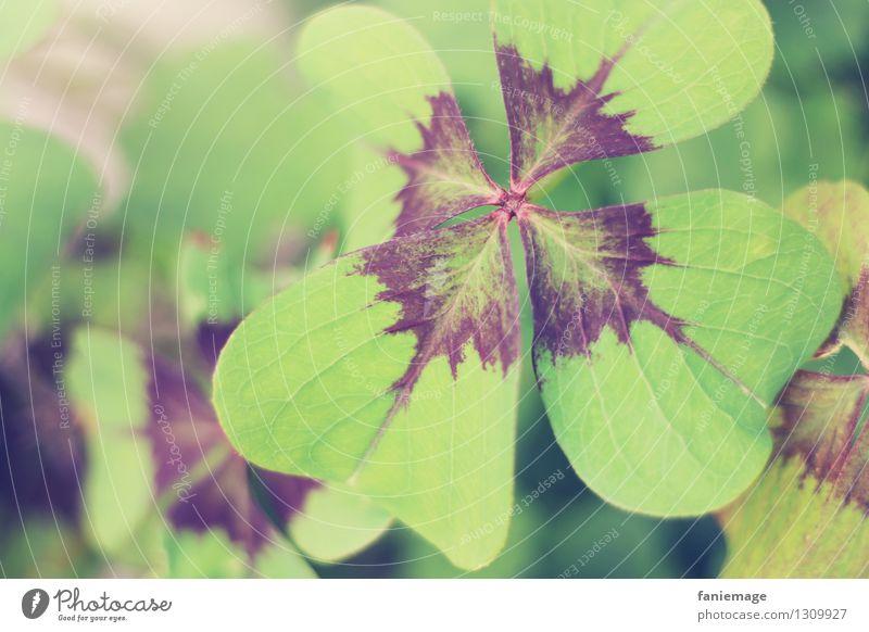 Viel Glück! Natur Garten Glücksklee Glücksbringer Klee Kleeblatt grün Glückwünsche Postkarte vierblättrig Blatt hellgrün Wunsch Alles Gute Geburtstagswunsch