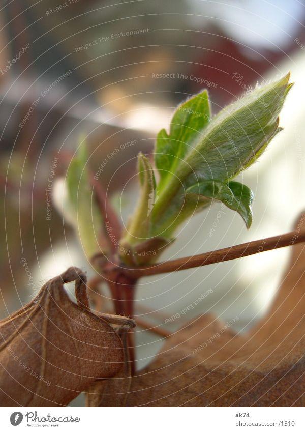 Es wird Frühling grün Blatt Jungpflanze