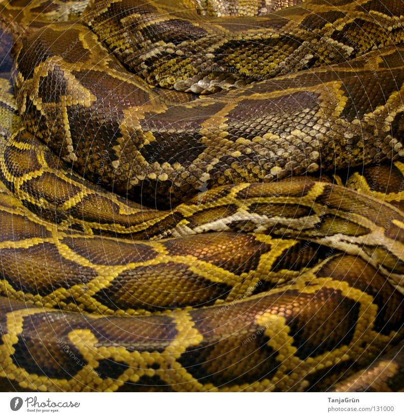 zärtliche Umarmung Reptil durcheinander eng Kobra Gitter braun beige schwarz Zoo Tiergarten gefangen schlafen gemütlich Muster Gift lang Umarmen Afrika