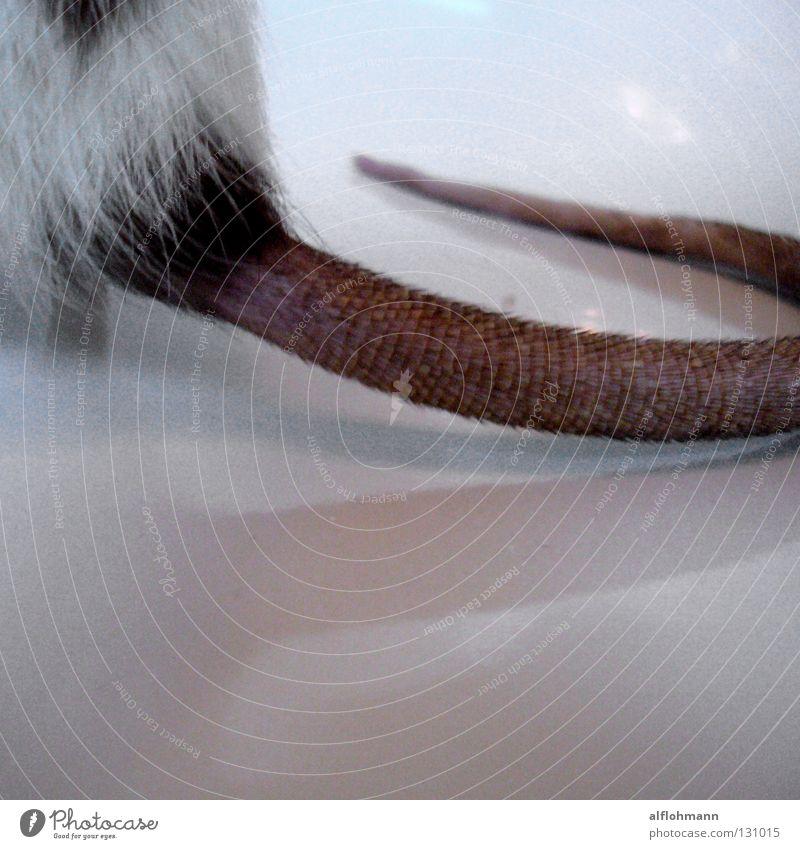 Ratt-an-schwanz Ratte Schwanz Nagetiere Bad Ekel Tier Fell rot Borsten Waschbecken Keramik Emaille Säugetier Rattenschwanz Ratti Morgen Toilette