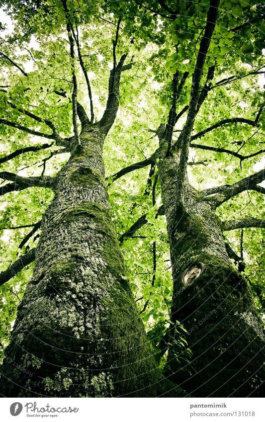 Trees springen