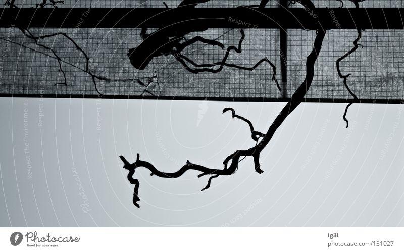 bliCklENkUNg pARt2 Muster Pflanze Reifezeit Geäst Geometrie ausrichten Bildaufbau chaotisch Farbton Partnerschaft diagonal verschmelzen Hintergrundbild