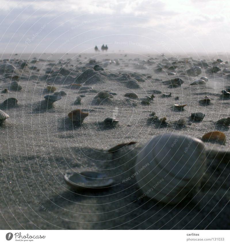 vom Winde verweht Strand Ferne Erholung Freiheit Sand Küste Luft Wetter Energiewirtschaft Klima Spaziergang Unendlichkeit Nordsee Sturm Muschel