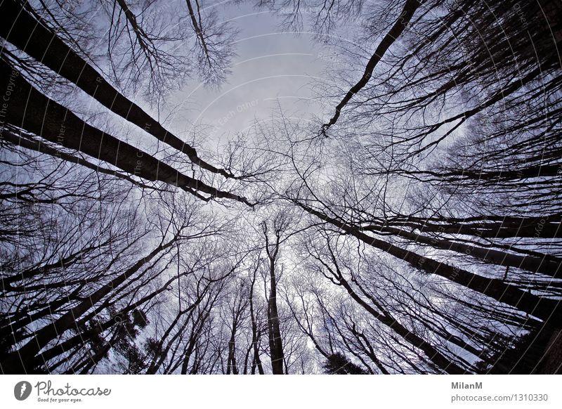 Wood Umwelt Natur Himmel Winter Baum Wald Holz bedrohlich dunkel gigantisch gruselig wild Gefühle Stimmung Angst Verzweiflung Abenteuer chaotisch Erfahrung