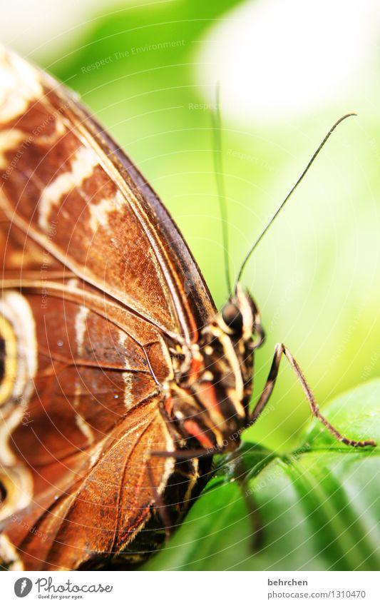 lebenslinien Natur Pflanze Tier Frühling Sommer Baum Blatt Garten Park Wiese Wildtier Schmetterling Flügel blauer morphofalter 1 beobachten Erholung fliegen