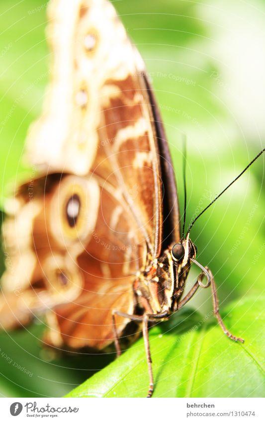 zunge strecken tut man nicht... Natur Pflanze grün schön Sommer Erholung Blatt Tier Frühling Auge Wiese Garten außergewöhnlich fliegen Beine braun