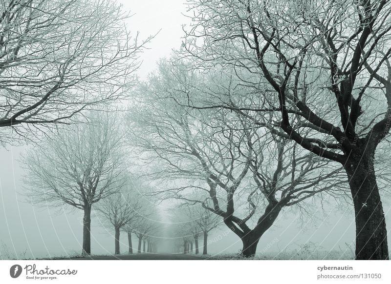 nebulöse Variante Allee Baum Winter Raureif kalt Nebel Ast Straße Frost Eis Schnee