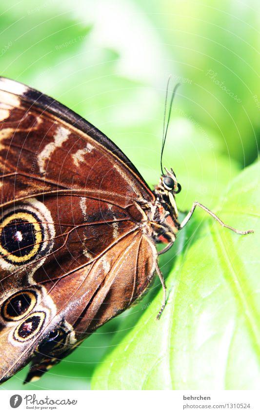 schaut mich an Natur Pflanze grün schön Baum Erholung Blatt Tier Auge Wiese Beine Garten außergewöhnlich fliegen braun Park