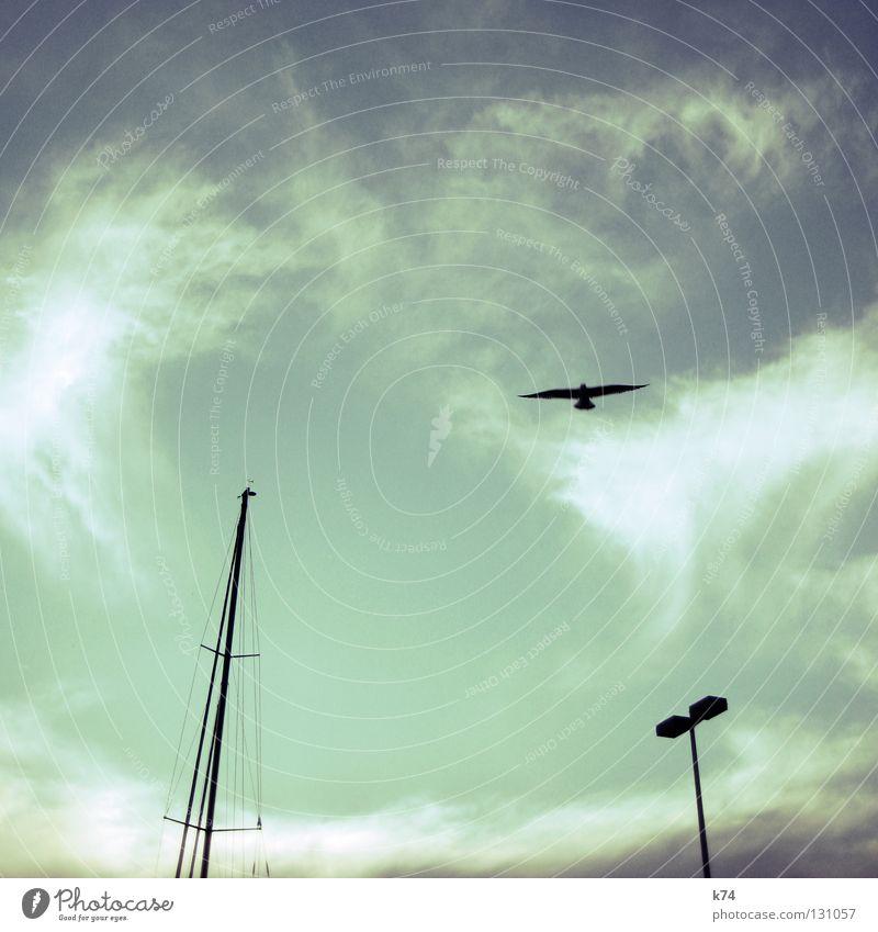 DREIGESTIRN Vogel Laterne Straßenbeleuchtung Wasserfahrzeug kreisen Schweben Zirkel Wolken Luft Himmel Hafen Möve Strommast Segel fliegen Luftverkehr Wind