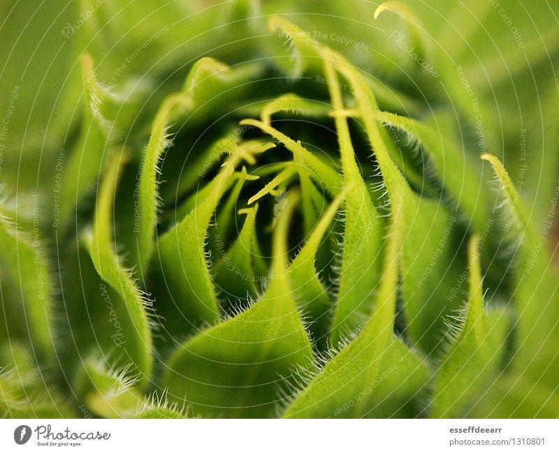 Macro Garden Action: Green Two Umwelt Natur Pflanze Sonne Sommer Klima Schönes Wetter Blume Blatt Grünpflanze Garten atmen Blühend Duft knien krabbeln