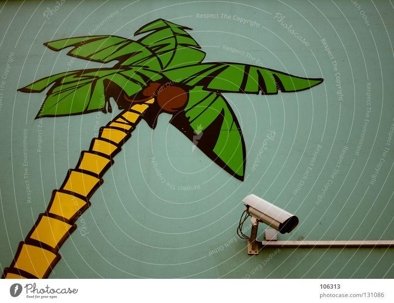 SHOT TO NOTHING grün gelb Wand Suche Sicherheit Schutz beobachten Palme Videokamera Grundbesitz elektronisch gemalt Überwachung privat technisch