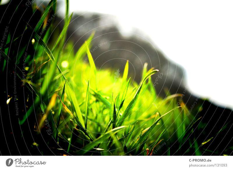 Green Natur grün Wiese Gras Rasen