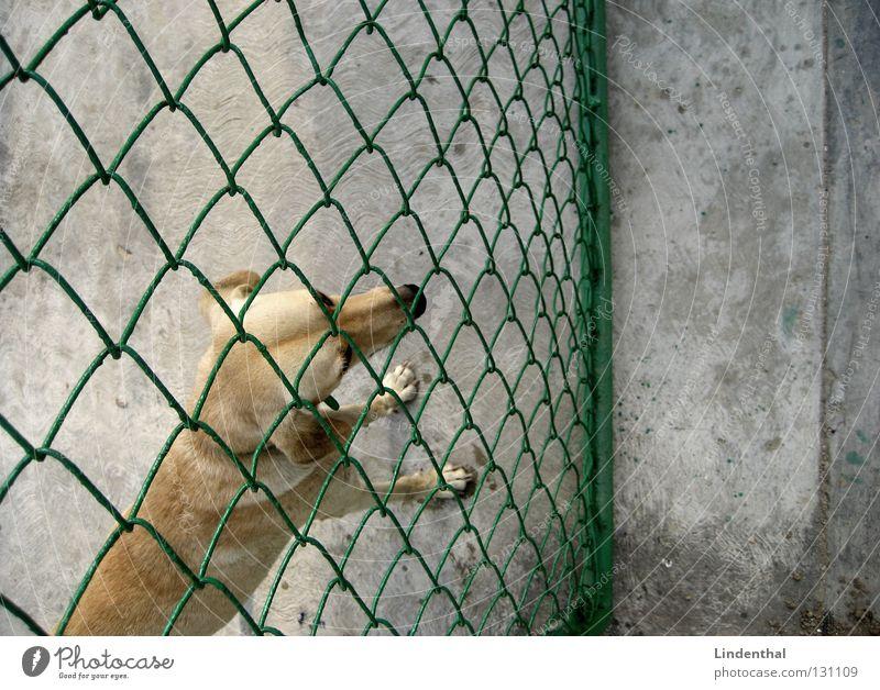 Schnuffel will rein Hund Fell Gitter Zaun Maschendraht Beton Betonboden Vogelperspektive Eingang Trauer Sehnsucht vermissen Säugetier schnuffel dog oben