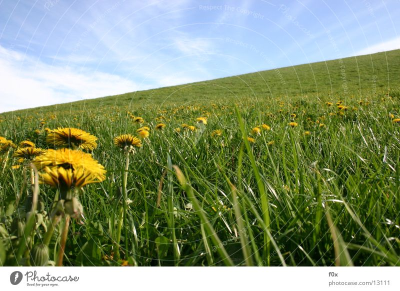 Butterblumenparty Himmel Sonne grün Wiese Gras Frühling Idylle Löwenzahn Weide Mecklenburg-Vorpommern