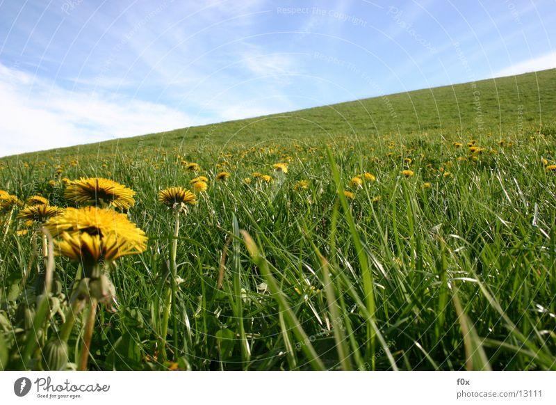 Butterblumenparty Löwenzahn Wiese Gras grün Weide Frühling Mecklenburg-Vorpommern Himmel Sonne Idylle