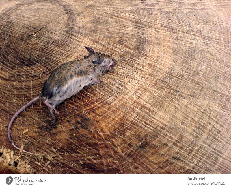 Tag am Strand Baum ruhig Tier Tod Holz Trauer Vergänglichkeit Verzweiflung Maus Säugetier Nagetiere Holzmehl Baumstumpf