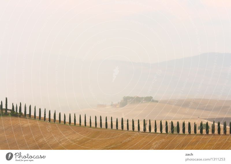 alles in Ordnung Umwelt Natur Landschaft Erde Sand Gewitterwolken Sommer schlechtes Wetter Nebel Pflanze Baum Zypresse Feld Hügel Val d'Orcia Toskana Italien