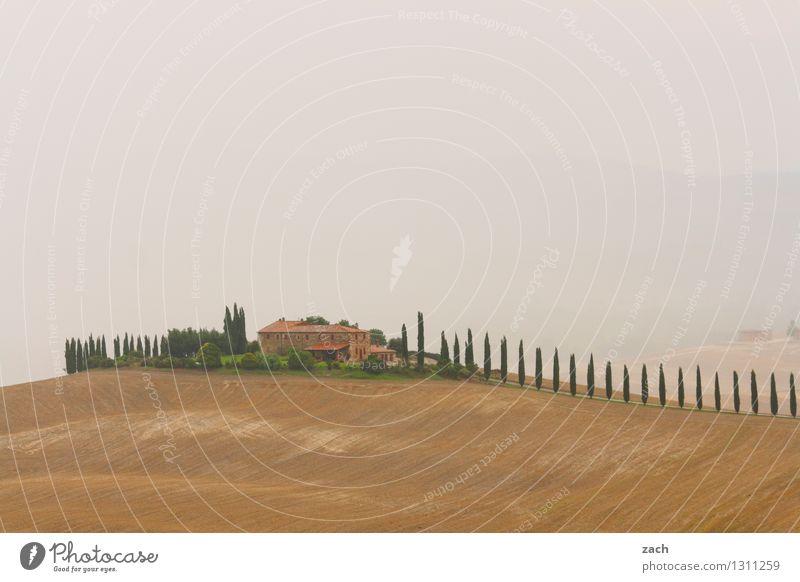 Wohlfühloase Landschaft Erde Sand Himmel Wolken Gewitterwolken schlechtes Wetter Nebel Regen Dürre Pflanze Baum Zypresse Feld Hügel Italien Toskana Dorf Haus