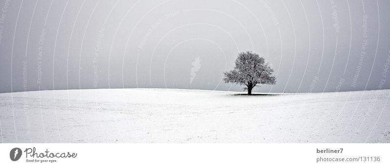 Welliger Horizont II wellig Schneeflocke Baum einzeln Winter Himmel einzeln stehend einzeln stehender baum
